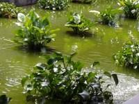 Hijaunya salah satu sudut taman di Secret Garden Village.
