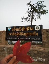 Daun maple dan titik puncak Phu Kradueng