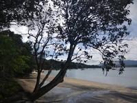 Rindangnya pepohonan di tepian pantai.