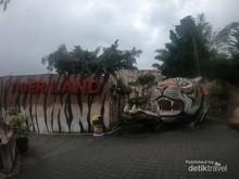 Foto: Bukan Ikan, Di Sini Kamu Bisa Mancing Harimau