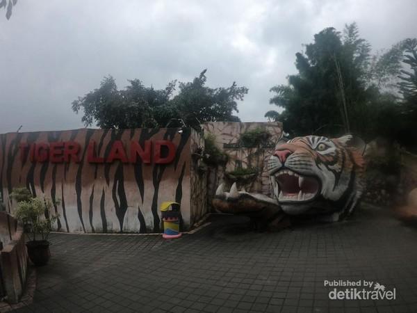 Terdapat aktivitas seru yang bisa kita lakukan bersama harimau di Tiger Land, Batu Secret Zoo