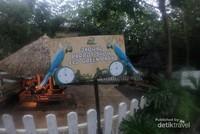 Pada jam tertentu diadalan atraksi burung Macaw yang pintar