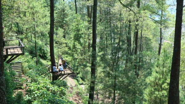 Tersedia juga platform diantara pohon pinus untuk berfoto.