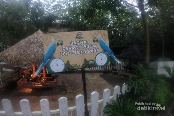 Pada waktu tertentu diadakan petunjukan burung macaw yang cerdas
