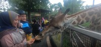 Rasakan sensasi memberi makan langsung hewan dari tanganmu sendiri