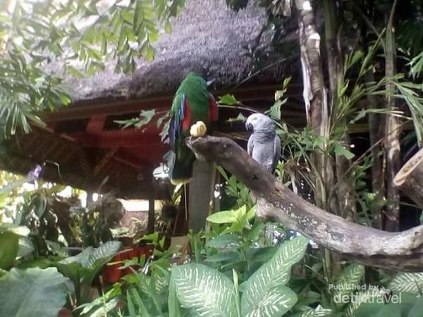 Cantiknya burung-burung di taman muzium Antonio Blanco.