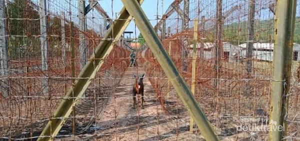 Pagar kawat berduri Coconut Tree Prison.