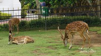 Istana negara yang terdapat di Jatim Park 3 adalah replika gabungan istana negara di Jakarta dan Bogor. Diluar bangunan istana, pengunjung disambut rusa-rusa layaknya di istana Bogor.