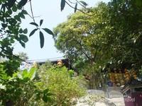 Pohon rindang menaungi jalan setapak menuju puncak kuil A Ma
