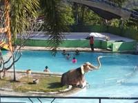 Anak-anak asik berenang di pai hari.
