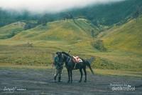 Persewaan kuda untuk pengunjung yang berada di sabana Bromo