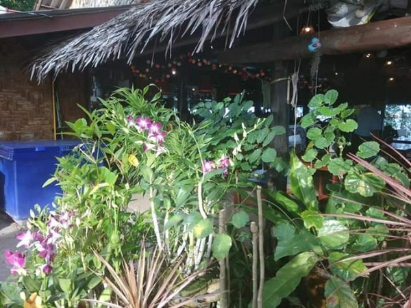 Hijaunya tanaman di halaman depan Nikita restaurant.