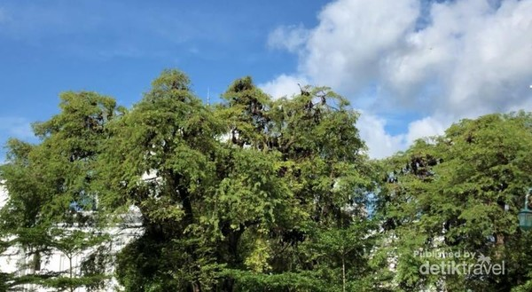 Kumpulan kalong atau kelelawar yang hinggap di pohon asam sekitar alun-alun watansoppeng yang menjadi mitos bagi masyarakat soppeng.