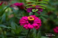 Setangkai bunga yang berada di taman bunga tempat Wisata Gerojogan Watu Purbo