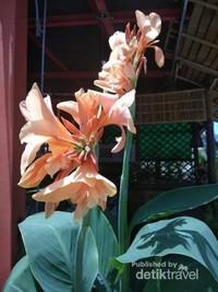 Bunga ganyong di depan resto, seperti di Indonesia nih.