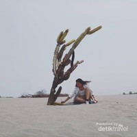 spot foto pohon kaktus by @sandbordingparangtritis