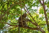 Monyet sedang bersantai di atas pohon