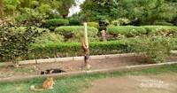 Tidak hanya di dalam area masjid, di taman ini juga banyak kucing.