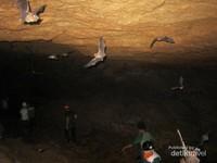 Ratusan Kelelawar yang Berterbangan