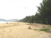 Di sepanjang pantai ditanami pohon cemara untuk mereduksi angin kencang dan melindungi pantai dari abrasi. Berteduh di bawah pohon cemara menjadi adem namun berhati-hati dengan dahan yang jatuh.