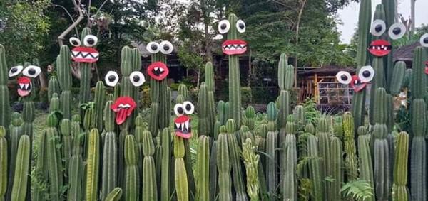 Jajaran kaktus yang cantik.