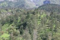 Hutan yang Asri