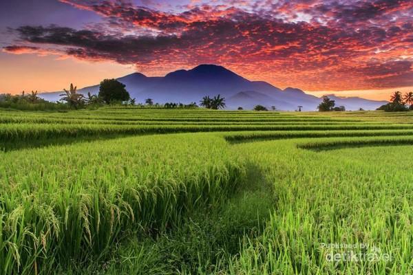 Keindahan Alam Indonesia dengan pesona Persawahan Pagi Hari dengan Gunung Barisan di Kemumu, Arga Makmur, Bengkulu Utara