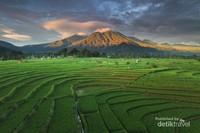 Pemandangan Persawahan dan Gunung dengan Drone di Kemumu, Arga Makmur, Bengkulu Utara