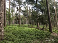 Di musim semi hutan mulai kembali nampak hijau