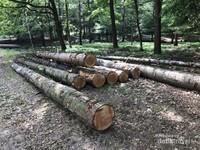 Semua pohon yang ditebang secara resmi, dikumpulkan dan kemudian diberi label kelayakan yang sah dari Lembaga Pengelola Hutan