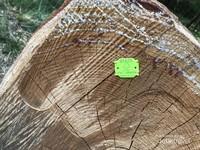 Label yang berwarna hijau berlogo FSC itulah yang menjadi penanda kayu resmi bukan hasil pembalakan/ penebangan liar.