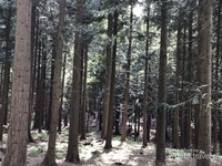 Senangnya berjalan-jalan di bawah sinar matahari yang menembus rindangnya pepohonan