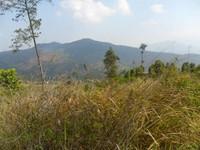 Gunung Kerenceng yang Dipenuhi oleh Ilalang