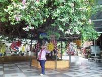 Berfoto di taman Doi Suthep.