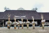 Jangan lewatkan pentas seni tari tradisional di Lamin Pemung Tawai Desa Adat Pampang yang selalu diadakan tiap hari minggu siang dan dipenuhi wisatawan lokal dan mancanegara.