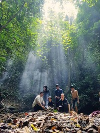 kanopi hutan yang tinggi membuat cahaya matahari tidak sampai ke dasar lantai hutan, membuat jejak cahaya yang indah.