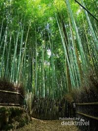 Pesona Hutan Bambu Arashiyama di Kyoto