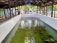 Ini kolam enangkaran tukik