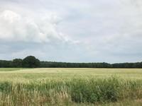Lahan pertanian gandum yang terbentang luas!