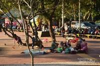 Beberapa wisatawan piknik dibawah pohon bersama keluarga.