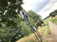Setelah menjelajahi museum kita dapat melanjutkan perjalanan menuju desa Bronneger lewat jalan setapak ini