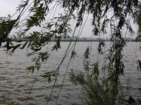Lampaian daun-daun pepohinan di tepi sungai menambah sahdu suasana mendung di tepian sungai Han.