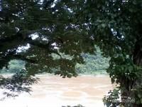 Dua pohon yang sudah berusia tua di tepian sungai.