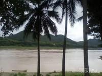 Nyiur ditepian sungai Mekong menjadikannya bak tepian Pantai yang indah.