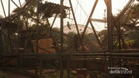Kakatua Jambul Kuning bertengger di sangkar raksasa saat matahari menjelang terbenam