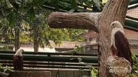 Elang Bondol salah satu maskot Provinsi DKI Jakarta yang terancam keberadaanya. Elang dapat menjadi indikator kebersihan lingkungan suatu wilayah
