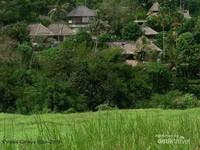 Paduan pemandangan sawah dan rumah-rumah penduduk Ubud.