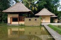 Bangunan apik diantara padi yang baru ditanam.
