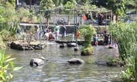 Kolam Berisi Ikan-ikan dan boleh ditangkap