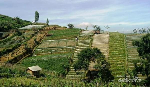 Pesona hijau Bukit Panyaweuyan yang tenang dan asri dari keramaian